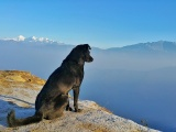Top 5 Tips for Traveling With Dogs